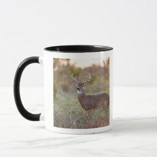 white-tailed deer (Odocoileus virginianus) male 2 Mug