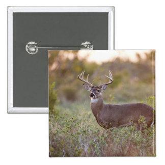 white-tailed deer (Odocoileus virginianus) male 2 Pinback Button