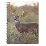 white-tailed deer (Odocoileus virginianus) male 2 Spiral Notebook