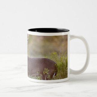white-tailed deer (Odocoileus virginianus) male 2 Two-Tone Coffee Mug