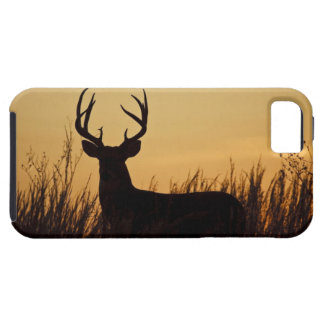 white-tailed deer (Odocoileus virginianus) male iPhone SE/5/5s Case