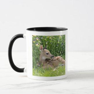 White-tailed deer (Odocoileus virginianus) Mug