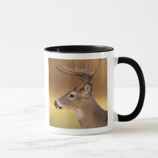 White-tailed Deer, Odocoileus virginianus, Mug