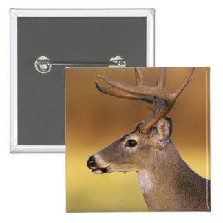 White-tailed Deer, Odocoileus virginianus, Pinback Button