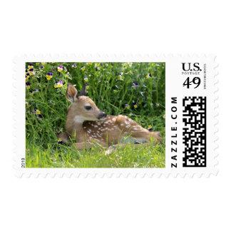 White-tailed deer (Odocoileus virginianus) Postage Stamp