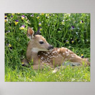 White-tailed deer (Odocoileus virginianus) Poster