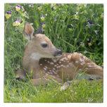 White-tailed deer (Odocoileus virginianus) Large Square Tile