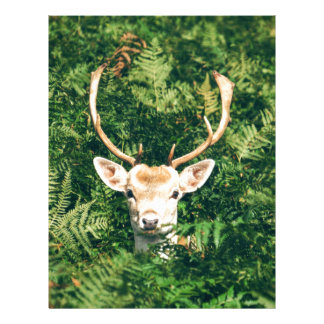 White-Tailed Deer Peeking Out of Bushes Letterhead