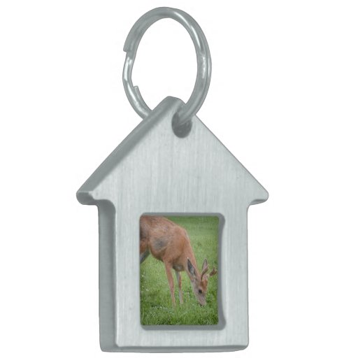 White Tailed Deer Pet Tag