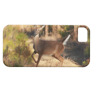 White-Tailed Deer - Phone Cover