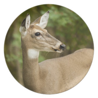 White Tailed Deer Party Plate