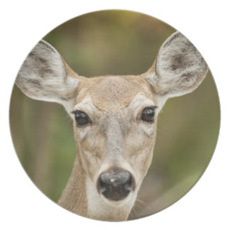 White Tailed Deer Plates