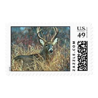 White-tailed Deer Postage
