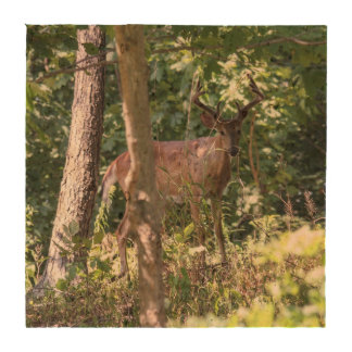 White-tailed Deer Drink Coasters