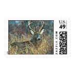 White-tailed Deer Stamp