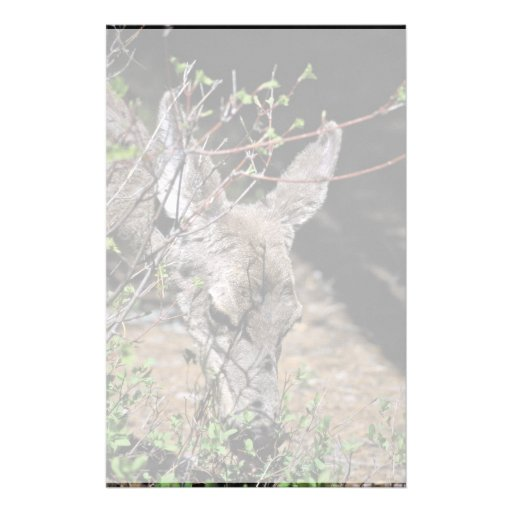 White-tailed Deer Stationery Paper
