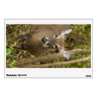 White Tailed Deer Wall Sticker