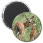 White-tailed Deer with Fawn 2 Inch Round Magnet