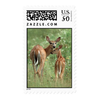 White-tailed Deer with Fawn Postage