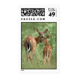 White-tailed Deer with Fawn Stamp