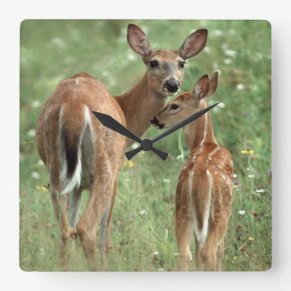 White-tailed Deer with her Spotted Fawn Square Wall Clock