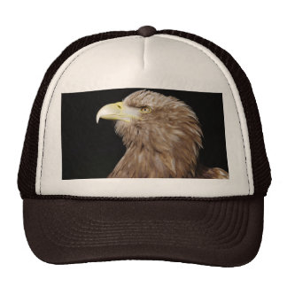 White-tailed eagle hat