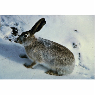 White-tailed Jackrabbit Cut Out