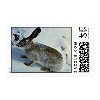 White-tailed Jackrabbit Stamps