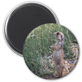 White-tailed prairie dog 2 inch round magnet