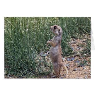 White-tailed prairie dog greeting card