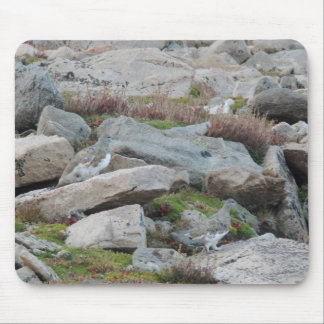 White tailed Ptarmigan Lagopus leucura Mouse Pad