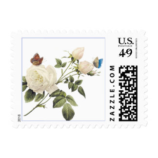 White Tea Rose with Pretty Butterflies Postage