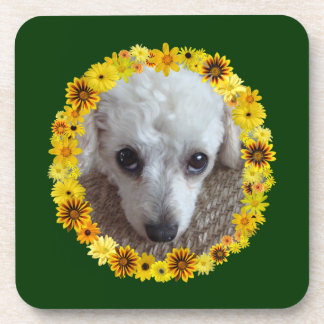 White Teacup Poodle Dog Daisies Drink Coaster