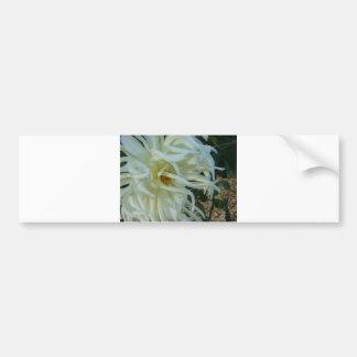 white tentacles flower 2 bumper sticker