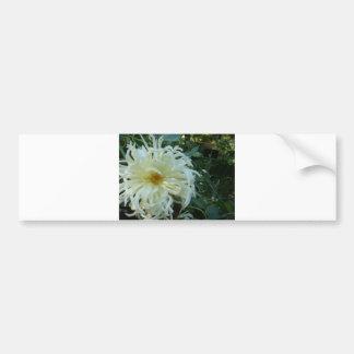 white tentacles flower bumper sticker