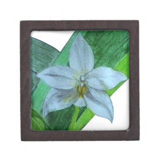 White Terrestrial Orchid Gift Box