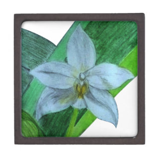White Terrestrial Orchid Jewelry Box