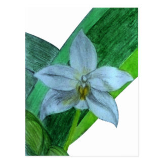 White Terrestrial Orchid Postcard