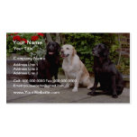 White Three Labrador retrievers sitting flowers Double-Sided Standard Business Cards (Pack Of 100)