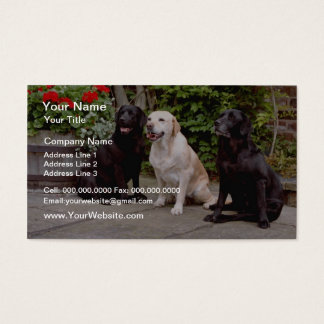 White Three Labrador retrievers sitting flowers Business Card