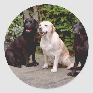 White Three Labrador retrievers sitting flowers Classic Round Sticker