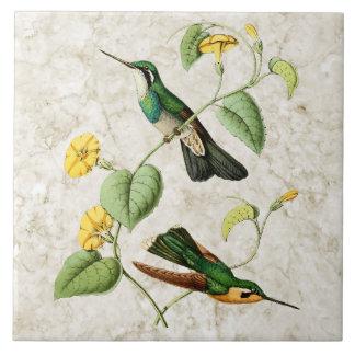 White Throat Mountain Gem Hummingbird Ceramic Tile