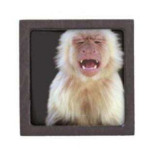 White-throated capuchin (Cebus capucinus) Premium Jewelry Box