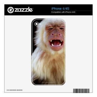 White-throated capuchin (Cebus capucinus) Decals For The iPhone 4S