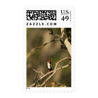 White-throated Kingfisher perched in a tree Stamp