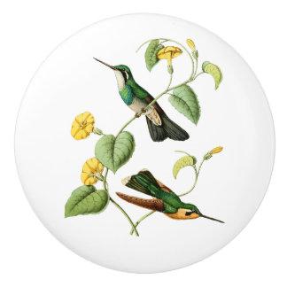 White Throated Mountain Gem Hummingbird Ceramic Knob