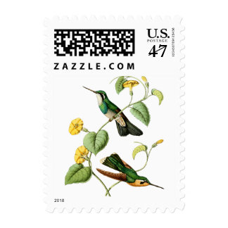 White Throated Mountain Gem Hummingbird Postage