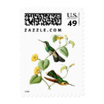 White Throated Mountain Gem Hummingbird Postage Stamp