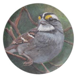 White Throated Sparrow Bird Art Plate
