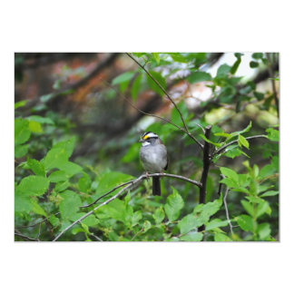 White Throated Sparrow Card